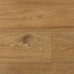 Lion oak – 54474198