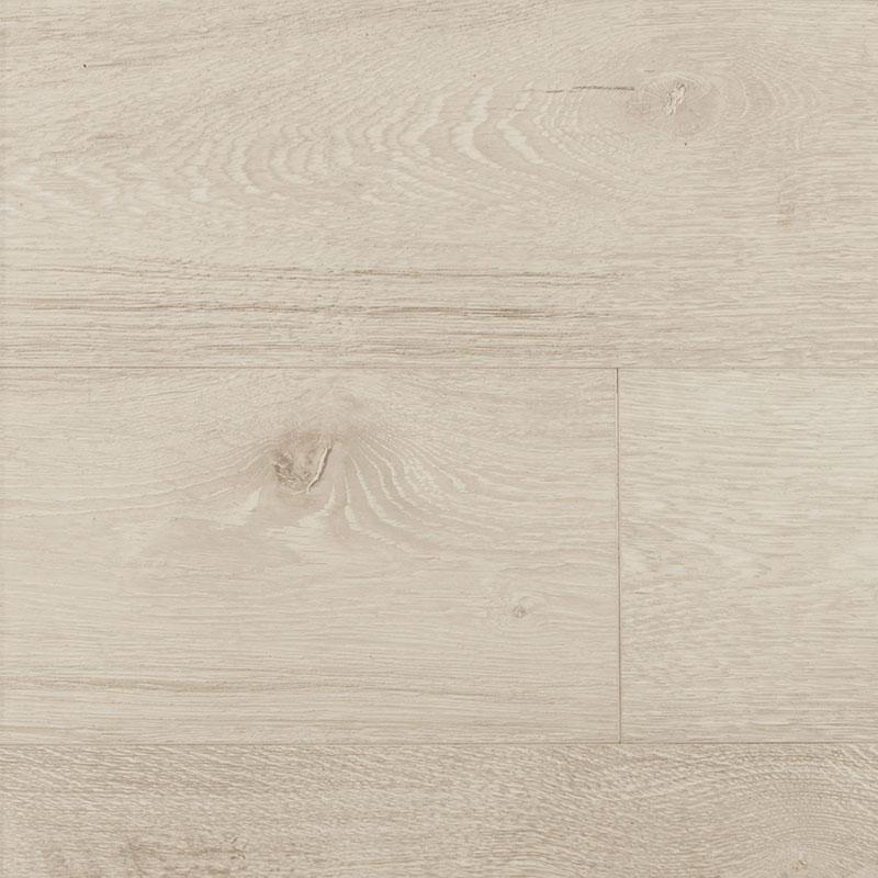 Isabeline oak – 54474191