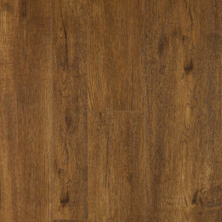 Sunlit oak – 8047