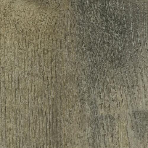 Cactus oak – 8062