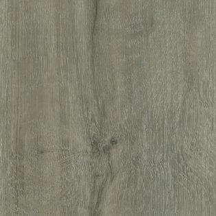 Blue Ridge oak – 886