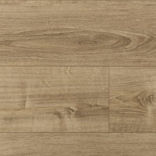 Silver oak – 54418015