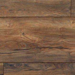 Rupert oak – 54480166